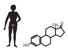 SHGB Sex Hormone Binding Globulin