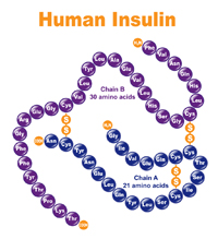 Human Insulin DNA Illustration