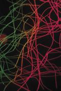 Insulite Microscopic view of fibers