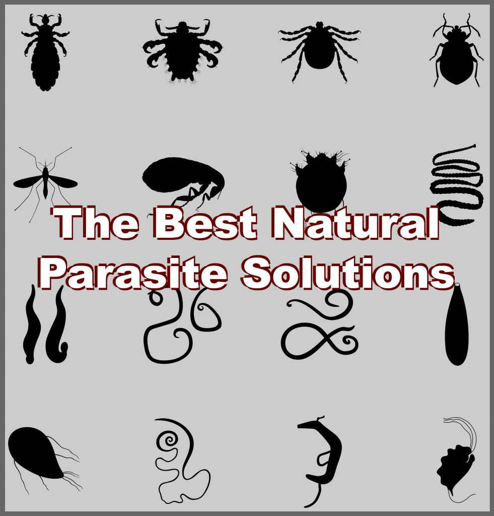 What are parasites, and how can we get rid of the uninvited visitors that could be plaguing our systems?